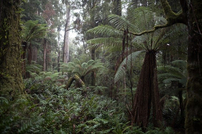 The Tarkine