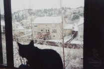 Phoebe looking at the Colorado snow