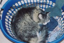 Zoby in a basket!