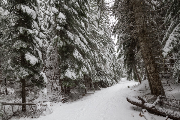ski-trail-10