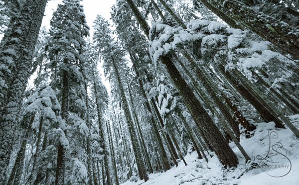 ski-trail-8