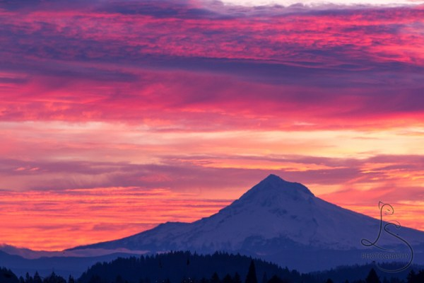A Pacific Northwest sunrise paints the sky in vibrant pinks behind Mount Hood