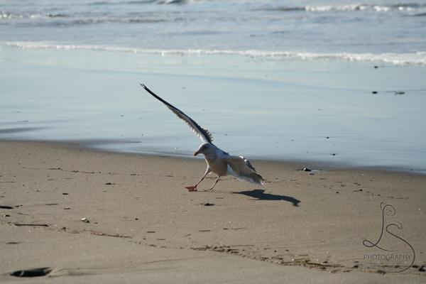 beach-2-3
