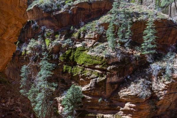 A mossy canyon wall along the Angels Landing trail   LotsaSmiles Photography