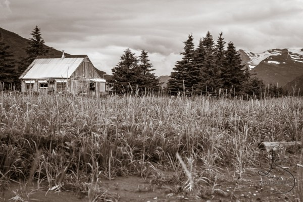 A cabin in the sedge grass of the Alaskan backwoods | LotsaSmiles Photography