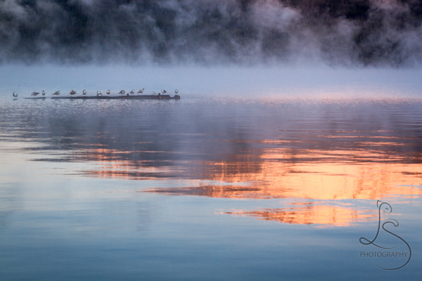 Seagulls rest on a log in the early morning mist on a chilly lake reflecting a sunrise-kissed mountain peak | LotsaSmiles Photography