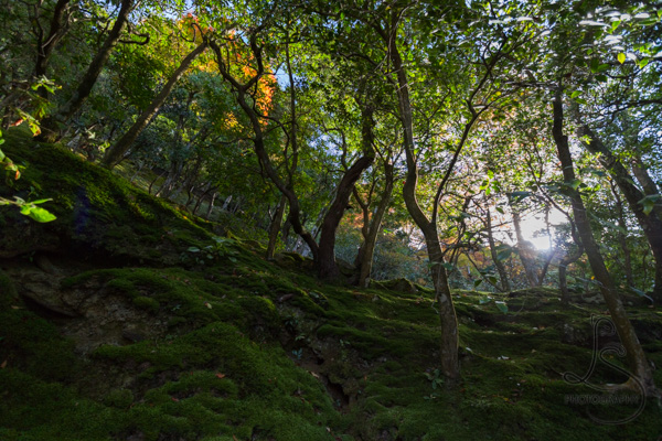 Sun poking through the trees along a shrine path in Kyoto   LotsaSmiles Photography