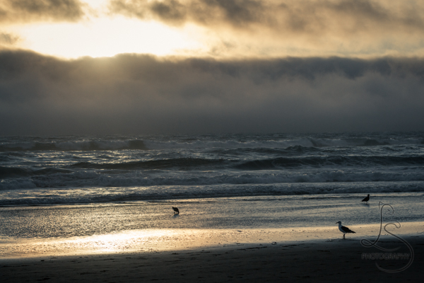 Cloudy sunset at an Oregon beach with seagulls on the shore | LotsaSmiles Photography