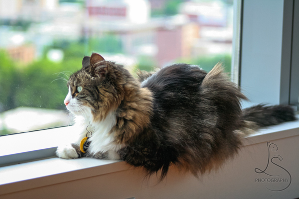 Zoe lounging in the windowsill with daylight warming her face | LotsaSmiles Photography