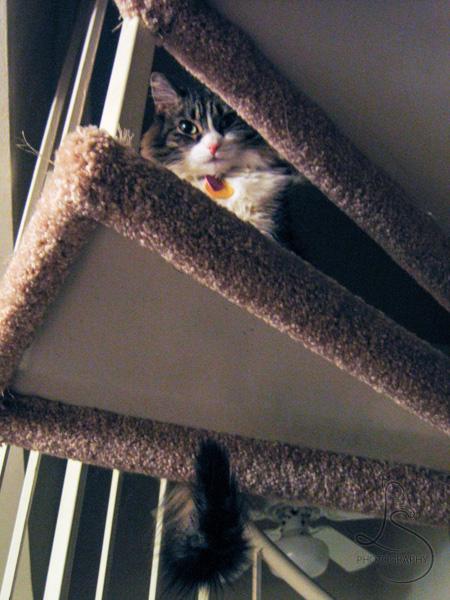 Zoe peeking between the steps | LotsaSmiles Photography