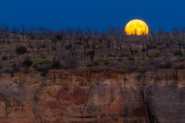 Full moon rising over the Mesa Verde canyon at dusk | LotsaSmiles Photography