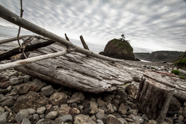 Large driftwood logs on a rocky beach under fishscale clouds | LotsaSmiles Photography