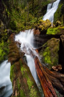 One of the many waterfalls of the Family Falls system wends its way over logs and through the greenery
