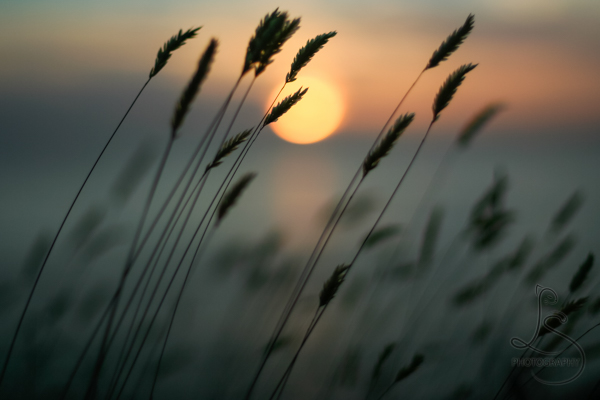Silhouette of reeds in front of a dying sunset | LotsaSmiles Photography