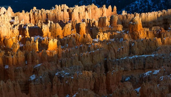 The tips of a field of hoodoos illuminated by the golden rays of sunset in Bryce Canyon | LotsaSmiles Photography