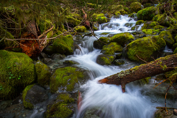 A silky creek cascading through mossy rocks along an Oregon hiking trail | LotsaSmiles Photography
