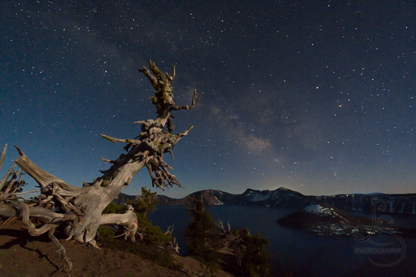 Gnarled tree overlooking Wizard Island in Crater Lake under the band of the Milky Way | LotsaSmiles Photography