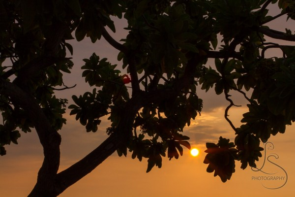 Tropical sun setting behind a silhouetted tree on a Hawaiian beach | LotsaSmiles Photography
