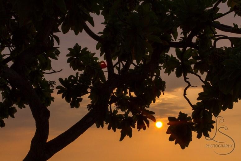Tropical sun setting behind a silhouetted tree on a Hawaiian beach | LotsaSmiles Photography