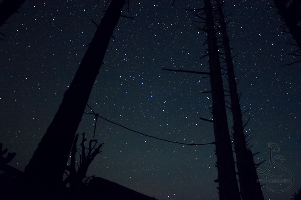 The Big Dipper framed between two trees | LotsaSmiles Photography