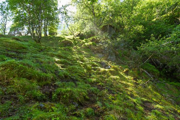 Sunbeam shining through the trees onto a mossy hillside | LotsaSmiles Photography