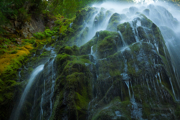 A gentle waterfall spidering down a mossy rock wall in the Pacific Northwest | LotsaSmiles Photography