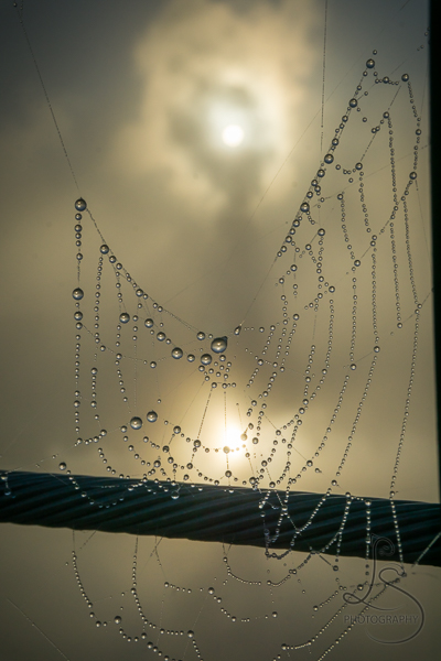 A dewy spiderweb in front of a hazy sun | LotsaSmiles Photography