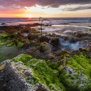 Paradise Sets - LotsaSmiles Photography