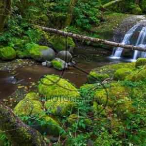 Verdant Falls - LotsaSmiles Photography