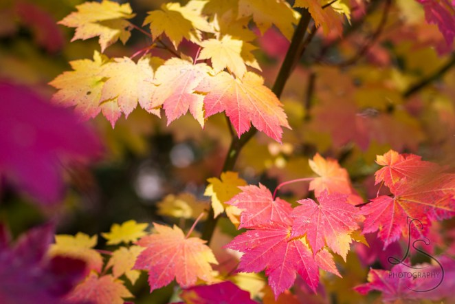 Autumn leaves in the sunshine | LotsaSmiles Photography