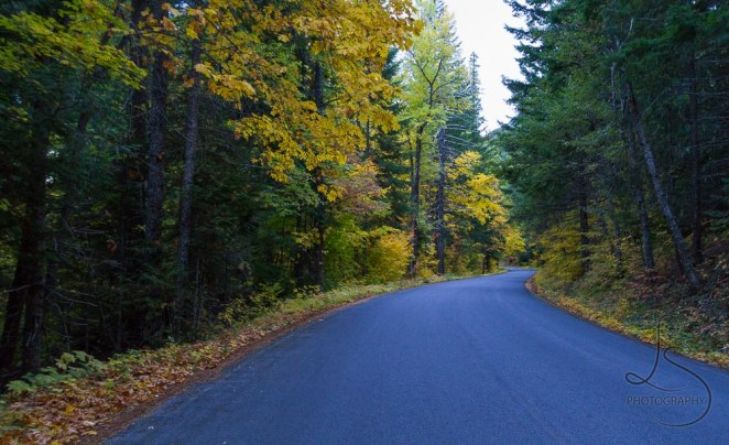 A road winding through autumn colors | LotsaSmiles Photography