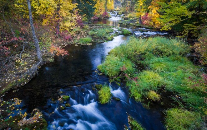 A beautiful creek running amidst autumn colors | LotsaSmiles Photography