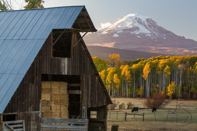 A barn stuffed with hay in front of Mount Adams at dusk | LotsaSmiles Photography