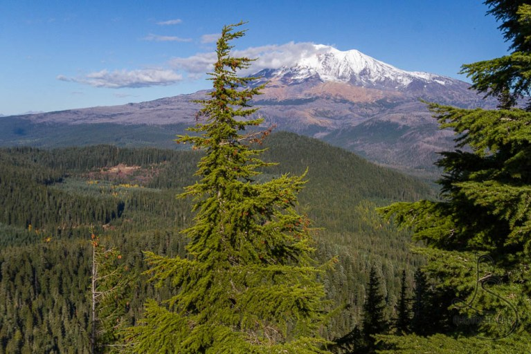 The view of Mount Adams | LotsaSmiles Photography