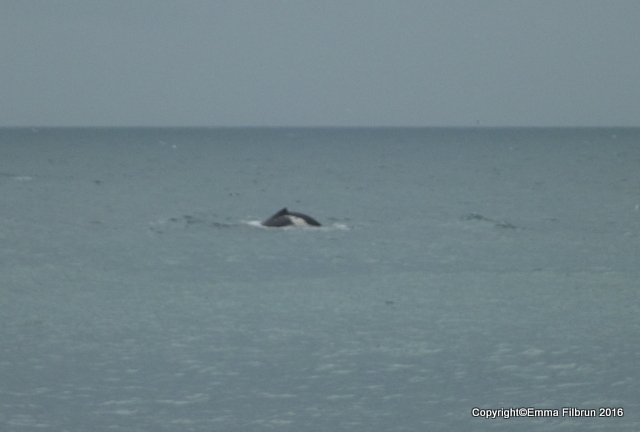 I think this is a dolphin.
