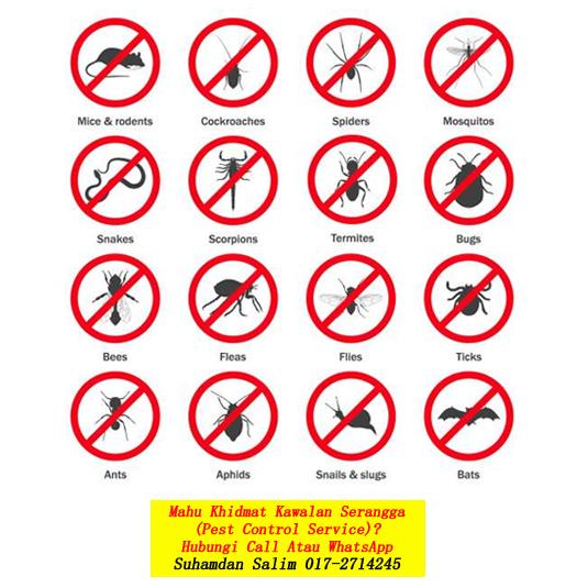 syarikat membasmi kawalan serangga perosak membasmi masalah serangan anai-anai nyamuk tikus semut lipas burung kelawar fumigation services pewasapan semburan disinfection covid-19 kota tinggi