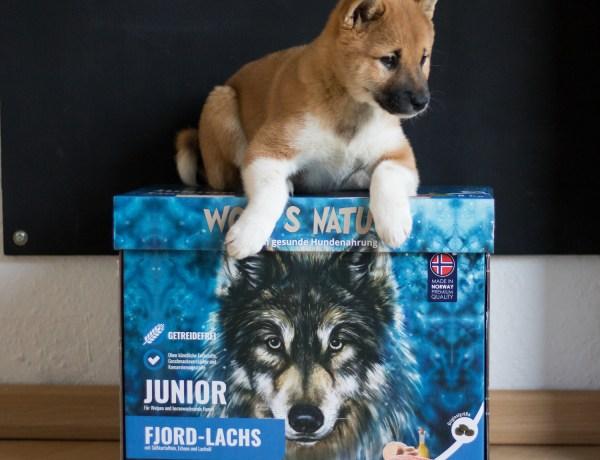 Wolf's Nature Junior