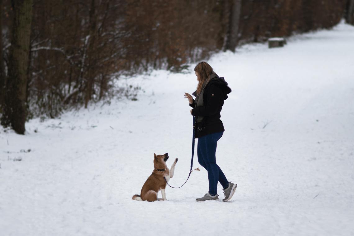 Lottes erster Schnee