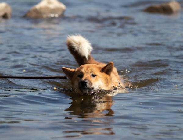 Lotte Schwimmen