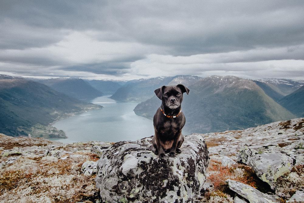 Wanderung mit Hund Nala Norwegen