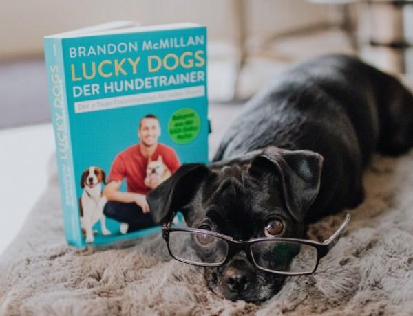 Lucky Dogs Hundetrainer