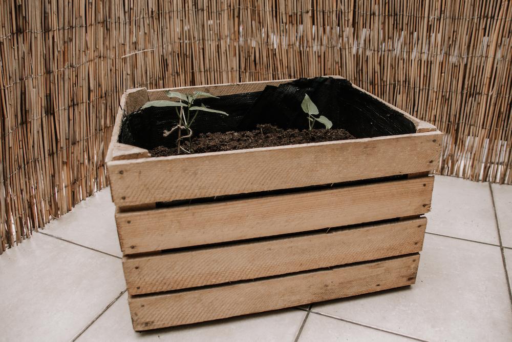 DIY Weinkiste bepflanzen