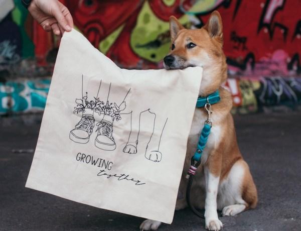Lotte Gegenstand halten Hundetricks