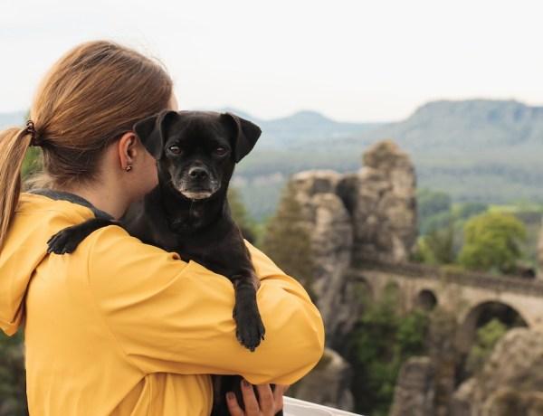 Hund in der Sächsische Schweiz: Basteibrücke mit Hund