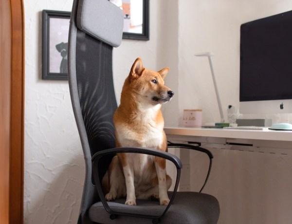 FlexiSpot höhenverstellbarer Schreibtisch