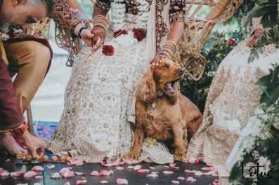 Lotus Photography Bournemouth Poole Dorset Hampshire 20190622 Anjnee & Harry Indian Wedding 388