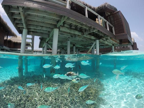 coral embaixo no nosso bangalô