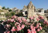 flores em junho na Capadócia
