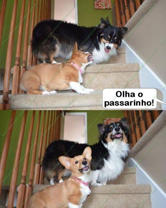 cachorros pose foto