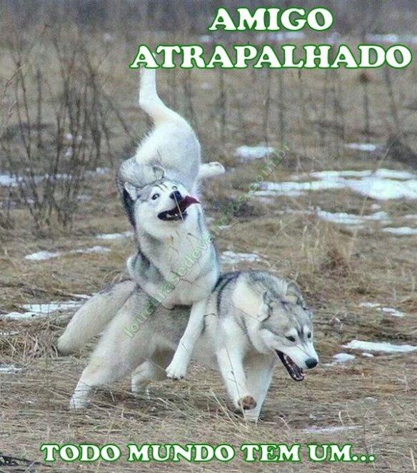 cachorro desajeitado